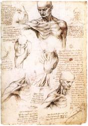 Desenhos-Anatomicos2